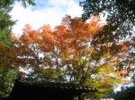 some autumn color